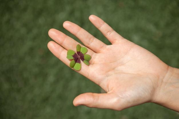 Tragen eines glücklichen vierblättrigen kleeblatts.