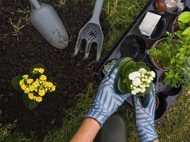 Tragende handschuhe des gärtners, die schösslinge halten, um im garten zu pflanzen