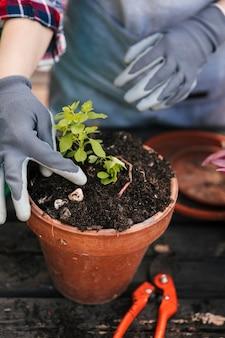 Tragende handschuhe des jungen weiblichen gärtners, die den sämling im roten topf pflanzen