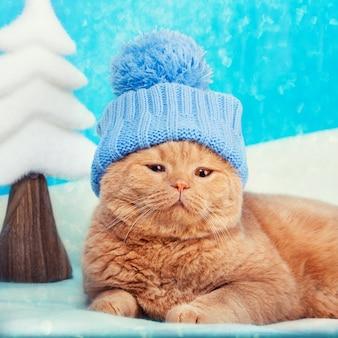 Tragender hut der katze, der am weihnachtshintergrund liegt