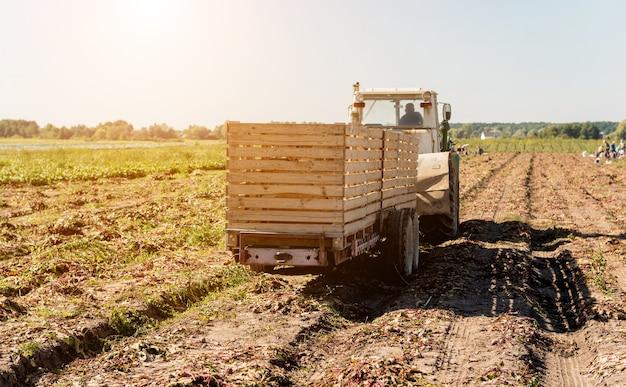 Traktor bei der feldernte von rübenwurzeln.