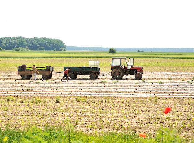Traktor mit pflug auf feld
