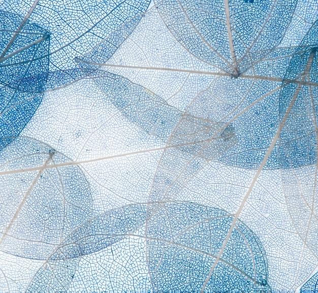 Transparente hintergrundtextur aus bunten blauen blumenblättern