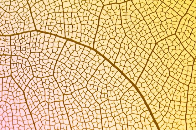 Transparentes blatt mit gelber hintergrundbeleuchtung