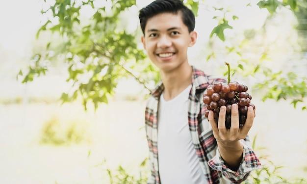 Trauben in der jungen asiatischen bauernhand, die nach der ernte vom weinberg hält, gesundes fruchtkonzept.