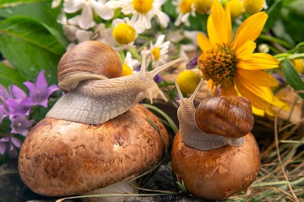 Traubenschnecken sitzen auf pilzen in der natur. weichtiere und wirbellose.