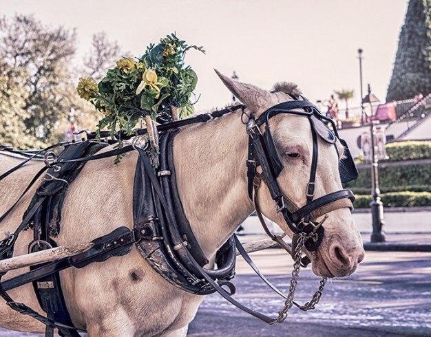 Traurig pferd