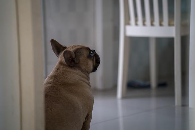 Traurige französische bulldogge, die auf fliesenboden gegen die tür sitzt