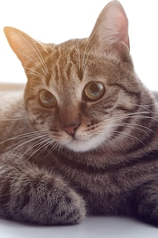 Traurige nachdenkliche katze, die auf der fensterbank sitzt.