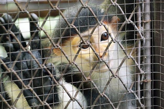 Trauriger affe in einem käfig