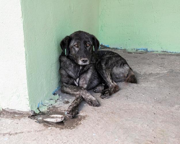 Trauriger hund, der im tierheim wartet, um von jemandem adoptiert zu werden