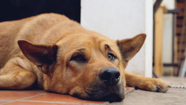 Trauriger hund, der zu hause auf boden - schlafendes hundeeinsames tierisches obdachloses konzept niederlegt