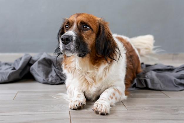 Trauriger hund des hohen winkels, der weg schaut
