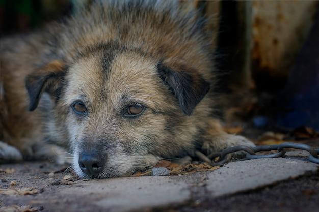 Trauriger hund wird an eine kette gebunden