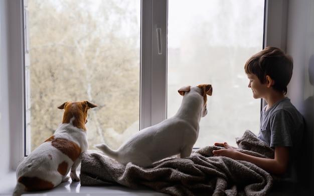 Trauriger kleiner junge und hunde schauen aus dem fenster