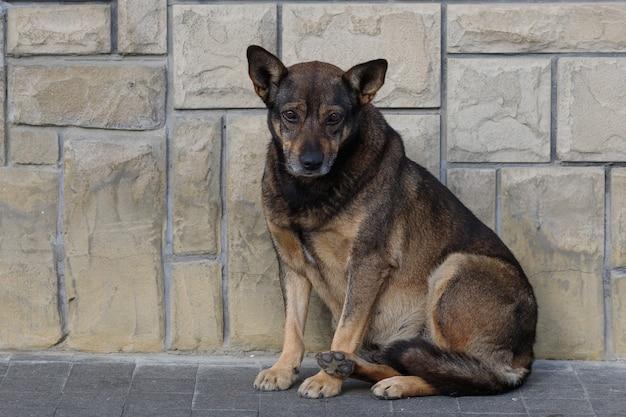 Trauriger und verlassener obdachloser hund
