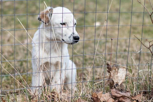 Trauriger welpe, einsamer hund hinter gittern. zwinger, streunender hund. tier im käfig. tierheim