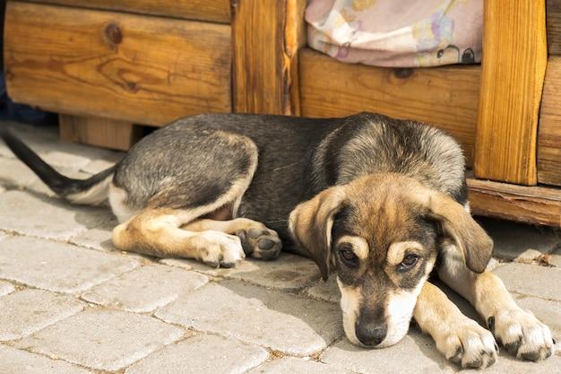 Trauriger welpe liegt nahe hundehütte