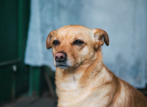 Trauriges hundeportrait