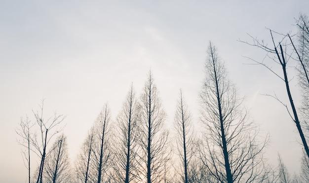 Treetops an einem wintertag