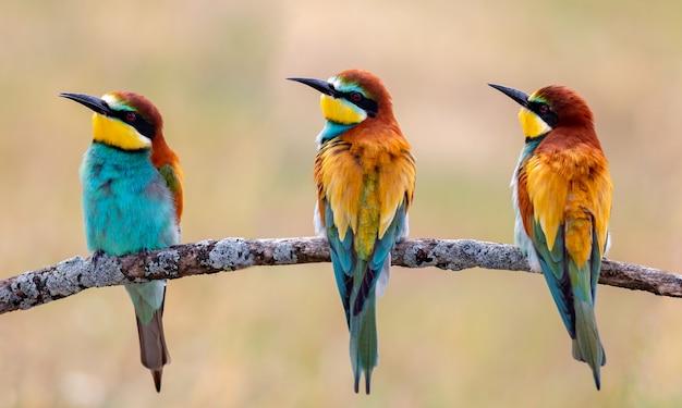 Treffen von vier bienenfressern