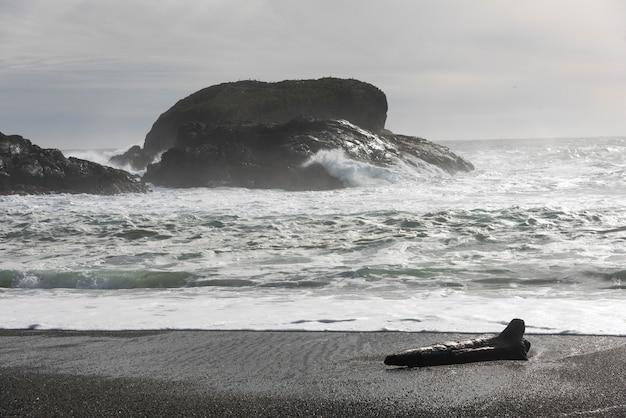 Treibholz am strand, pacific rim nationalpark reserve, tofino, vancouver island, british columbi