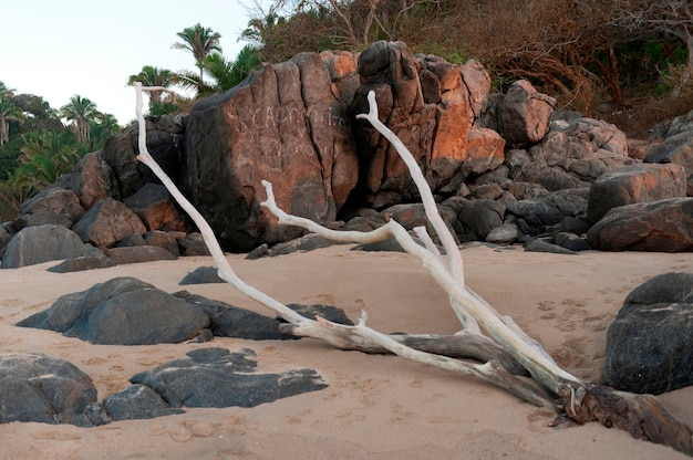 Treibholz am strand, sayulita, nayarit, mexiko