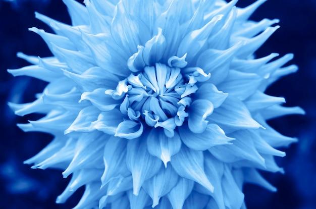 Trendfarbe 2020 klassisches blau, draufsicht. blume in trendiger blauer farbe
