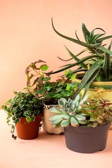 Trendige sammlung verschiedener zimmerpflanzen und sukkulenten rosa hintergrund.