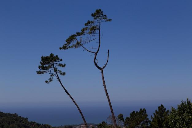 Trennen sie bäume gegen den himmel während der blauen dämmerung
