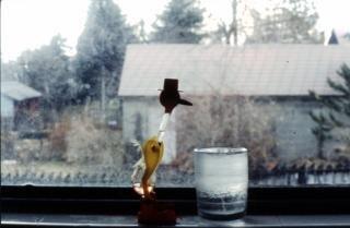 Trinken vogel