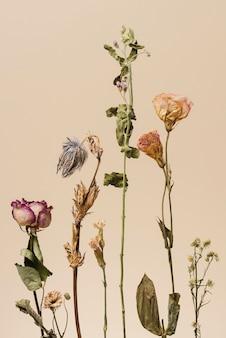 Trockenblumen auf beigem hintergrund