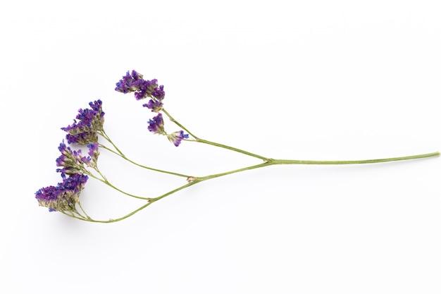 Trockenblumen auf weiß. flache lage, draufsicht.