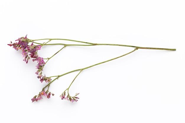 Trockenblumen auf weißem hintergrund. flache lage, draufsicht.