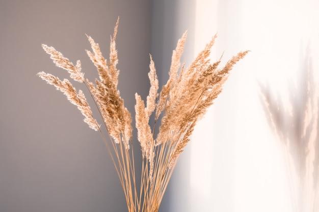 Trockenblumen mit schatten gegen eine helle wand in einem minimalistischen stil