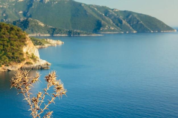 Trockenblumen türkisfarbenes meer und berge im hintergrund kabak valley beach in der nähe von fethiye turkey