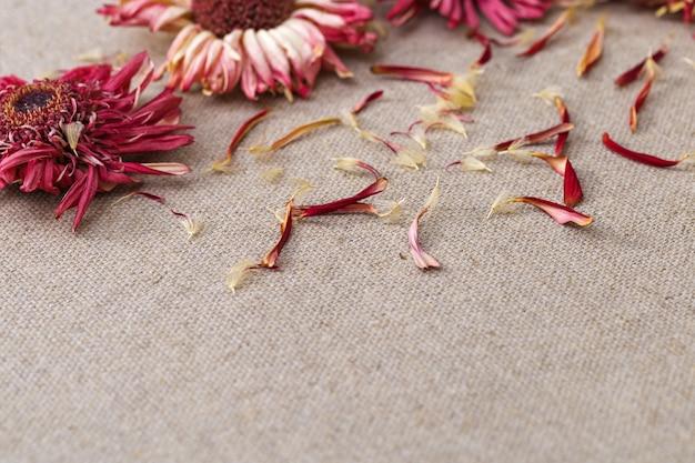 Trockenblumen und rote blütenblätter von gerbera.