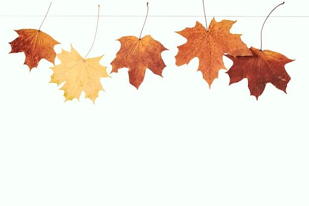 Trockene ahornblätter hängen an einem seil