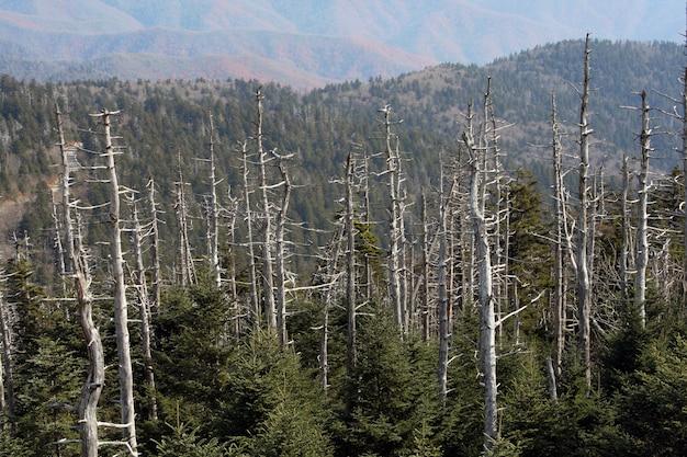 Trockene bäume auf der spitze der great smoky mountains, usa