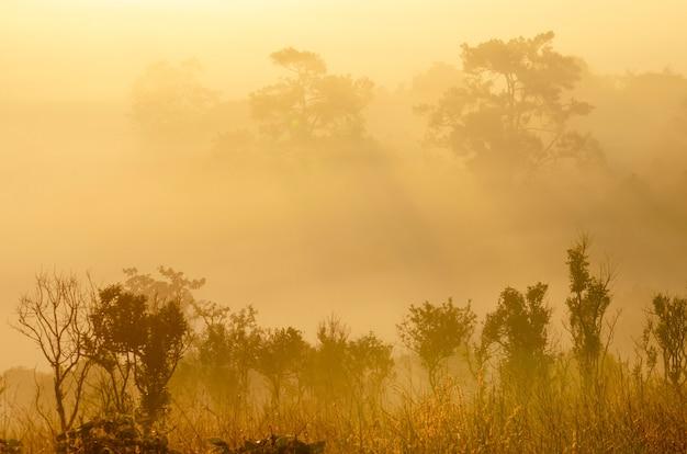 Trockene bäume, die sich im pool mit weißem nebel befinden, gemusterter hintergrund.
