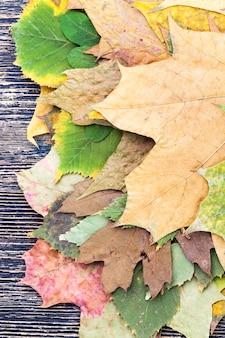 Trockene baumblätter, zusammengestapeltes baumlaub getrocknet zur aufbewahrung und dekoration