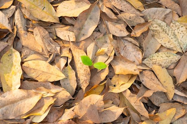 Trockene blätter fallen von bäumen. der laubbaum fällt im herbst im sommer.