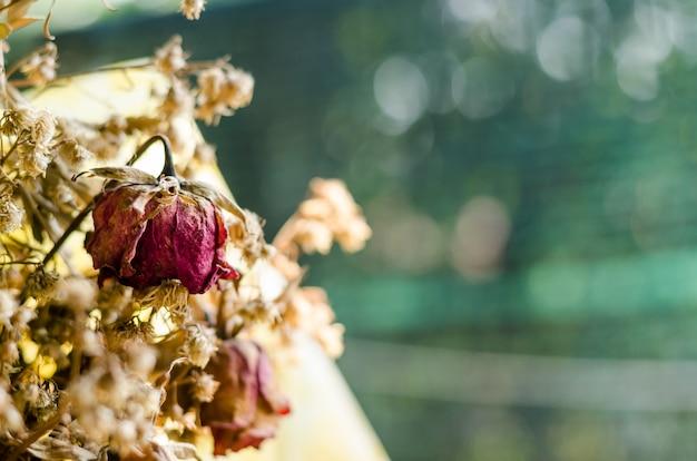 Trockene blätter und rosen