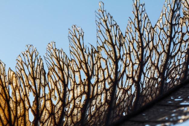 Trockene blattbeschaffenheit in der schönen natur. trocknen sie blätter auf einem himmelhintergrund