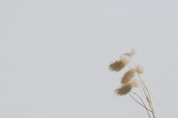 Trockene blüten auf staubigem grau