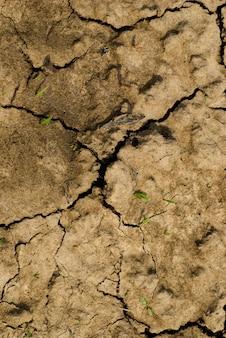 Trockene bodentextur mit grünen neuen sprossen