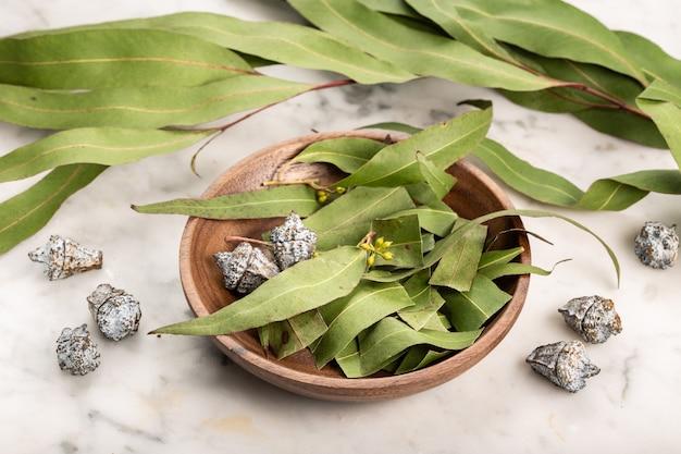Trockene eukalyptusblätter. kräuterkunde, natürliche heilmittel