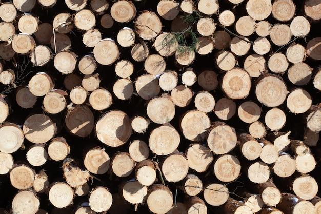 Trockene gefällte stämme, die übereinander gestapelt sind. brennholz ist auf dem haufen.