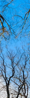 Trockene kahlen äste auf einem hintergrund des blauen himmels bei sonnigem wetter