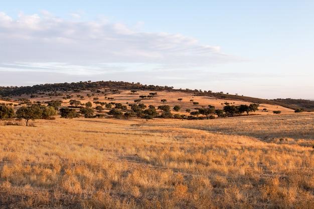 Trockene landschaft der region alentejo.
